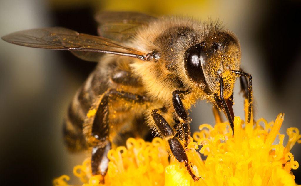Картинки по запросу Пчелы оказались способны к арифметике