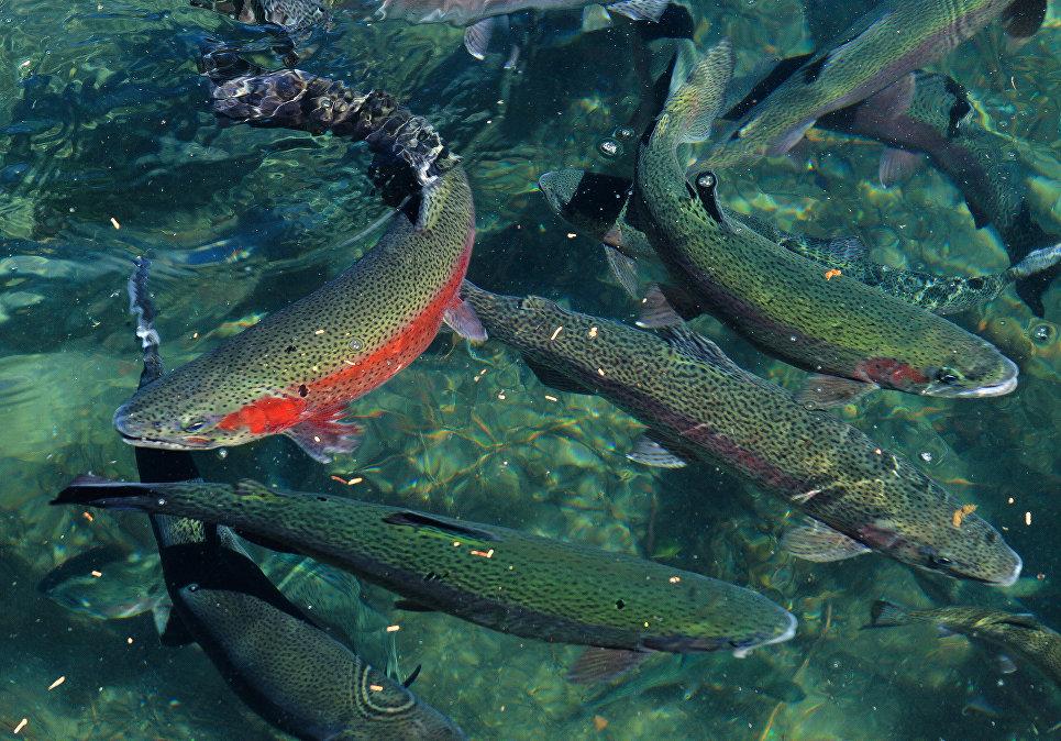 Река нельма рыбалка калининградская область