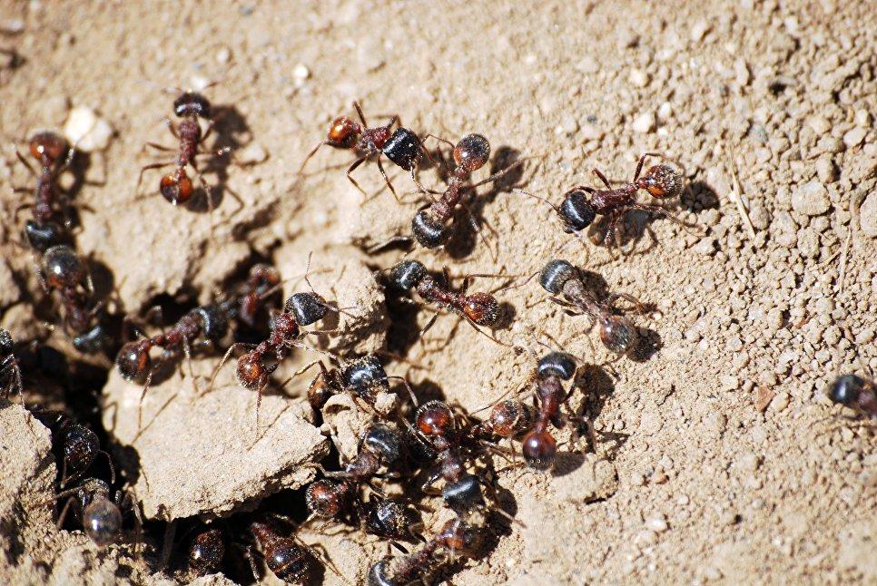 сингапур семьи муравьев картинки время как
