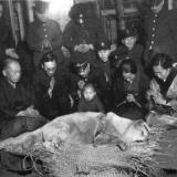 Хатико до его похорон в 1935 году