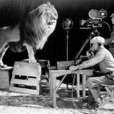 Операторы снимают рев льва для логотипа MGM
