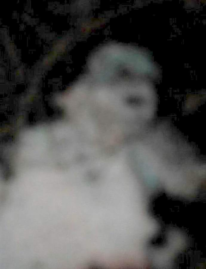 Фотография призрака в Санкт-Петербурге