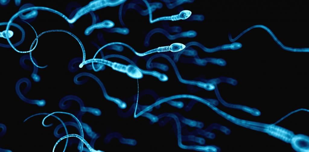 Сперма полезна для меня