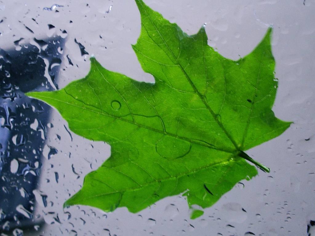 листок капли стекло загрузить