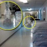 Это привидение с «инвалидным креслом» сфотографировала в подвале сотрудница дома престарелых «Kith Haven» города Флинт (Мичиган)