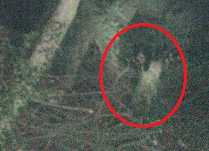 Фото привидения в лесу