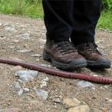 Гигантские дождевые червяки из Южной Америки