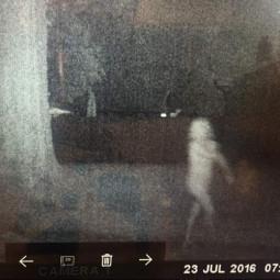 Фотография белого призрака в саду