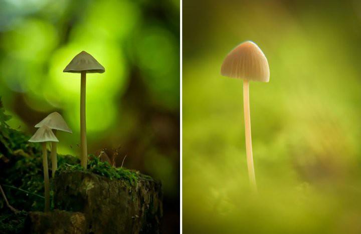 Удивительные фотографии грибов