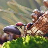 Интересные фото грибов