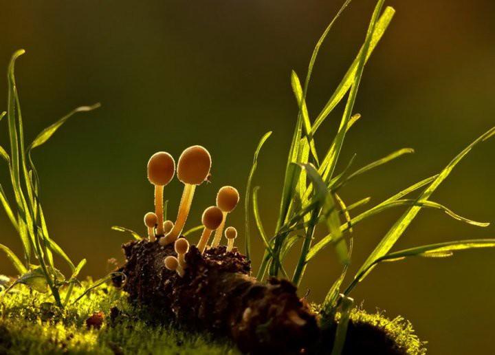 Интересные фотографии грибов