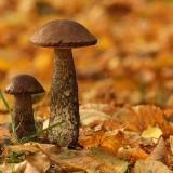 Красивая фотография гриба