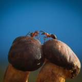 Удивительные грибы на фотографиях