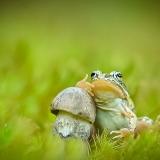 Фотографии грибов крупным планом