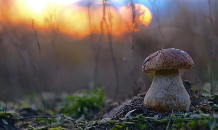 Удивительные фото грибов