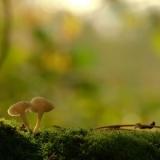 Красивые грибы на фотограйиях