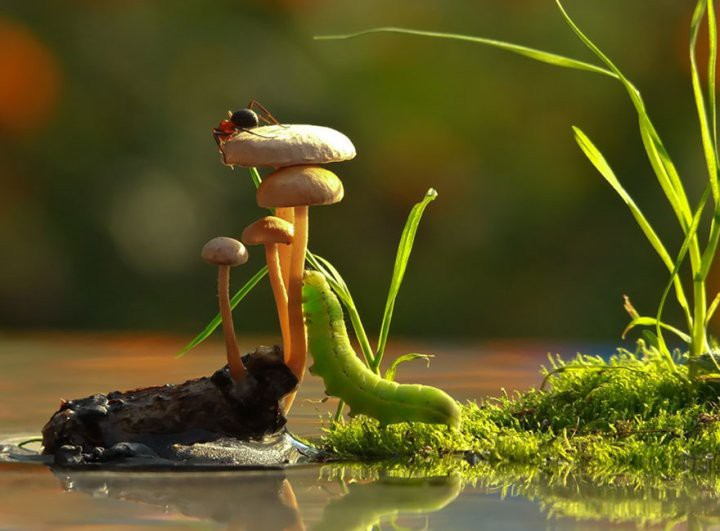 Фотография гриба
