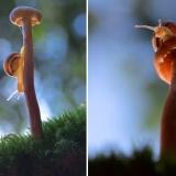 Красивое фото гриба
