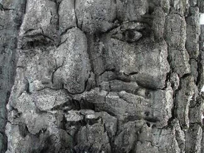 Это дерево похоже должно задавать загадки проходящим путникам