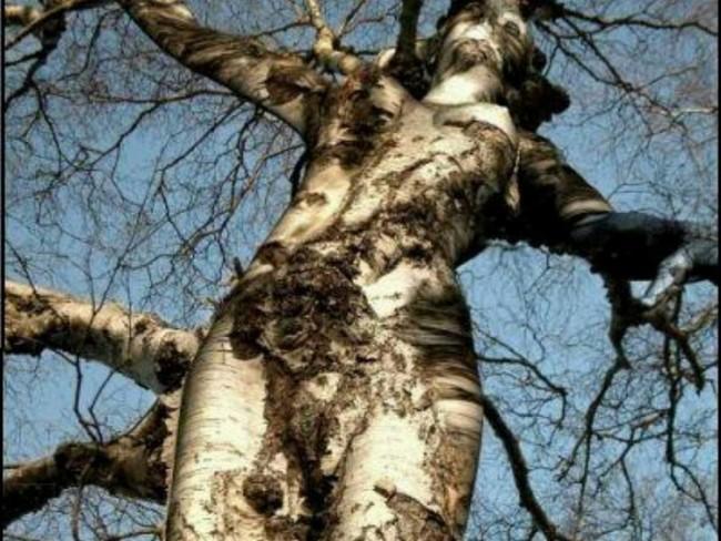 Не верится своим глазам, но это женщина-дерево
