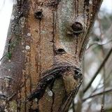 Это дерево самое главное. Оно всегда думает о судьбе леса