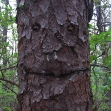 Дерево что-то задумало