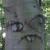 Безумное дерево