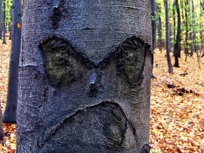 Это дерево явно не любит людей особенно, когда они его фотографируют