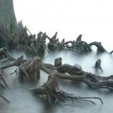 У вас должен быть сильных характер, чтобы пройти через эти деревья возле болота