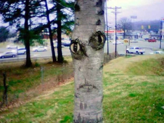 Немного расстроенное дерево
