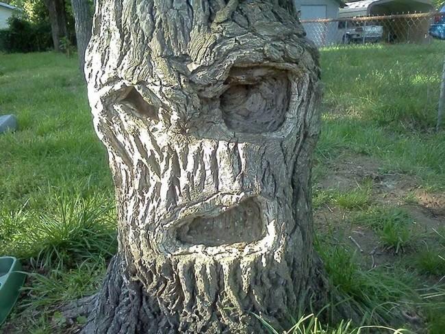Этому дереву надоело смотреть на ваше веселое лицо