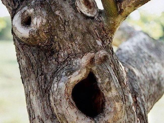 Дерево в ужасе от того, что всех друзей в округе вырубили
