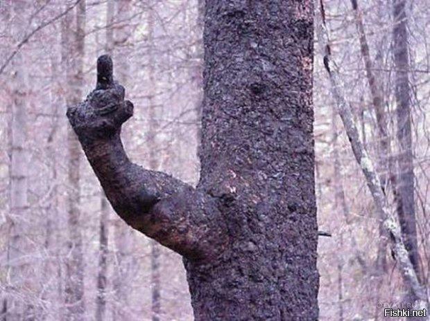 Это дерево явно что-то хочет нам сказать