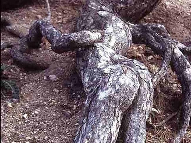 Человек-дерево