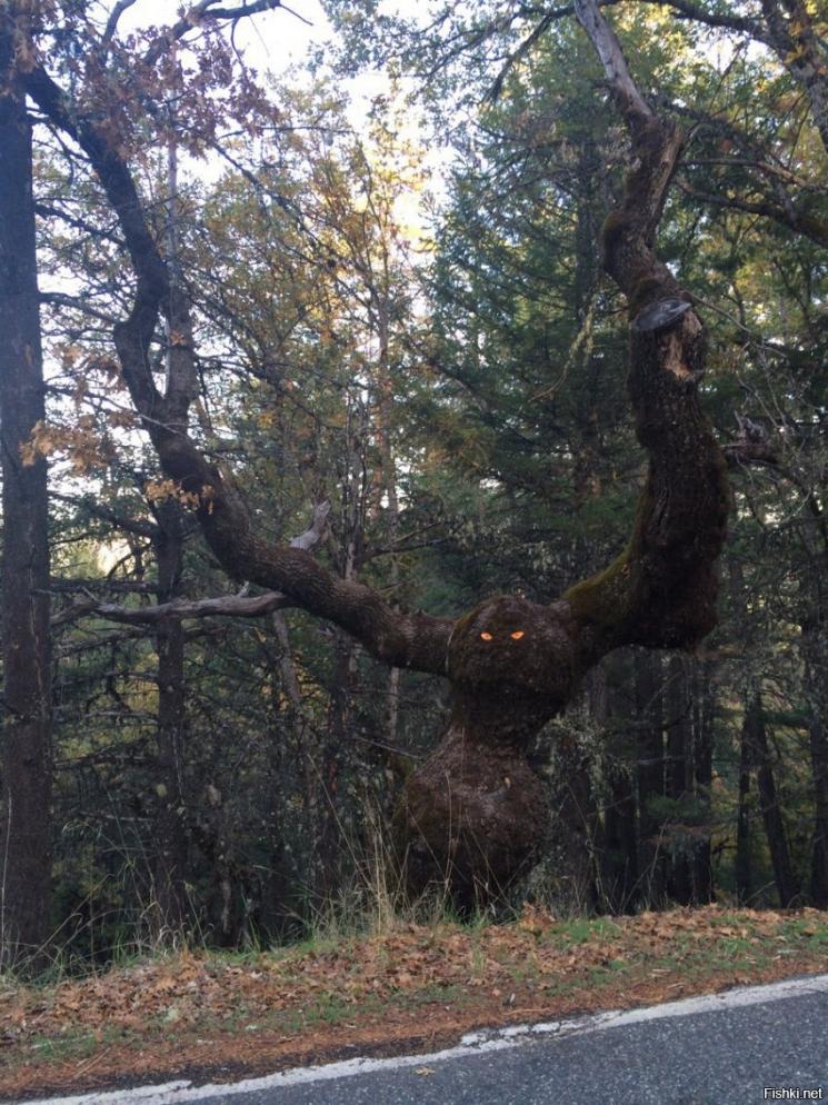 Пугающее дерево
