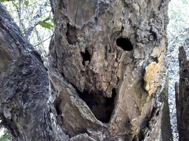 Весёлое дерево