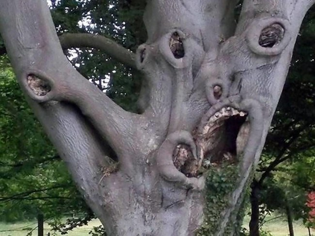 Дерево урод