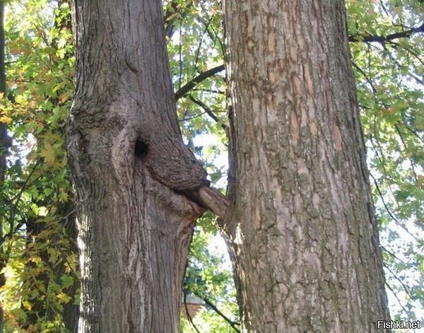 Секс на деревия фото 68-226