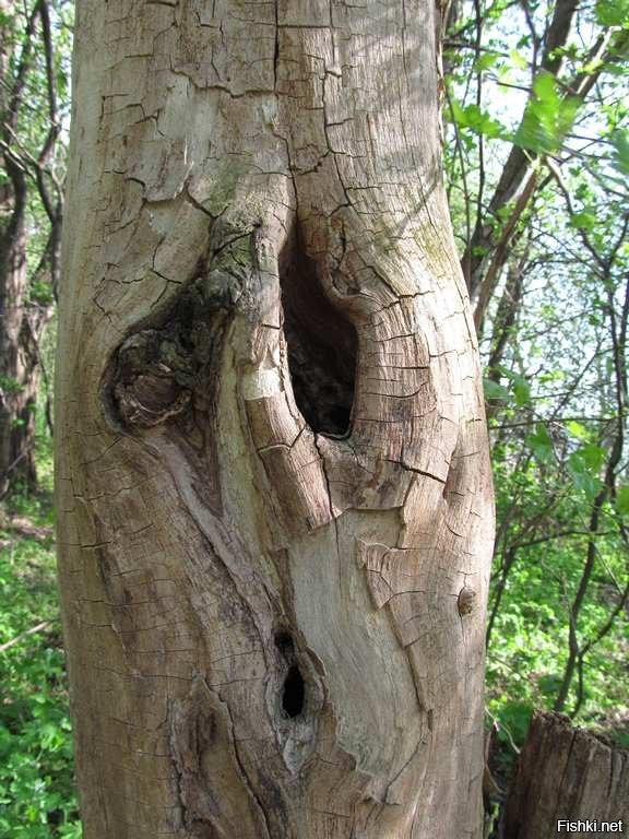 Дерево в недоумении