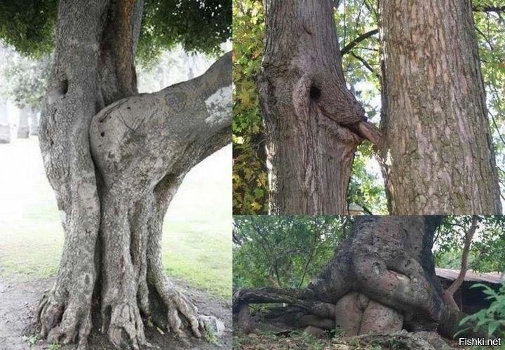 секс у дерева фото