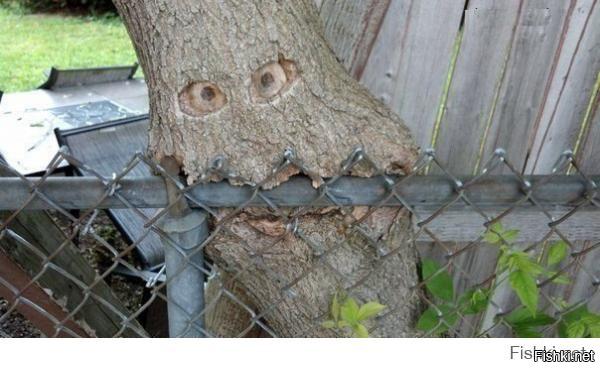 Очень голодное дерево