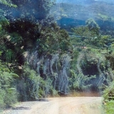 Призраки острова Борнео