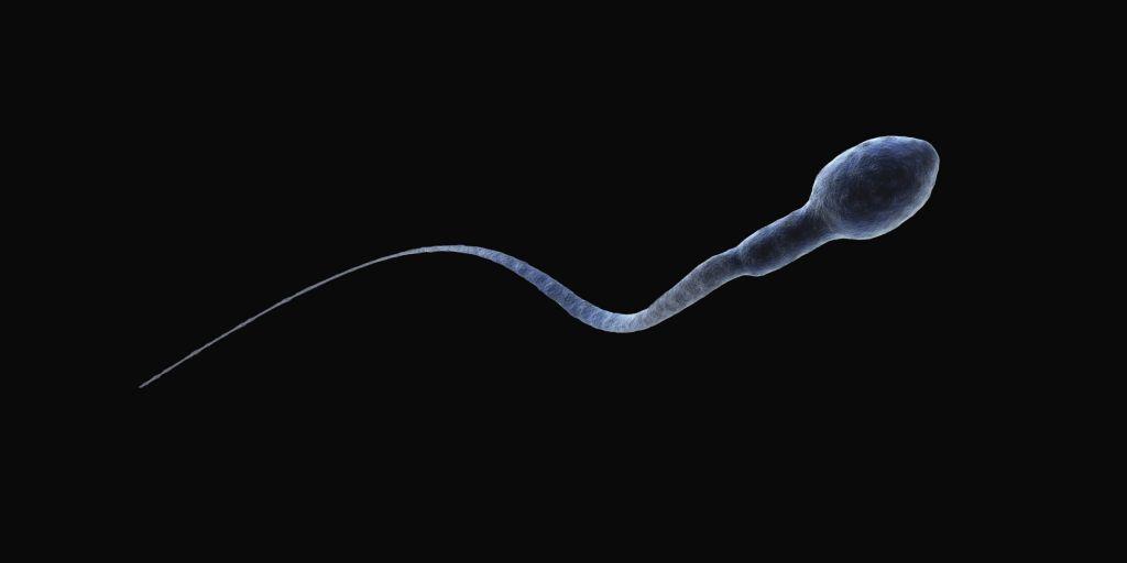 Сперма как пополняется — 5