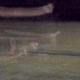 Фотография привидения собаки