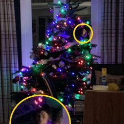 Привидения за рождественской елью