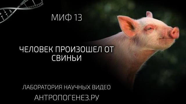 Человек произошел от свиньи. Мифы об эволюции человека