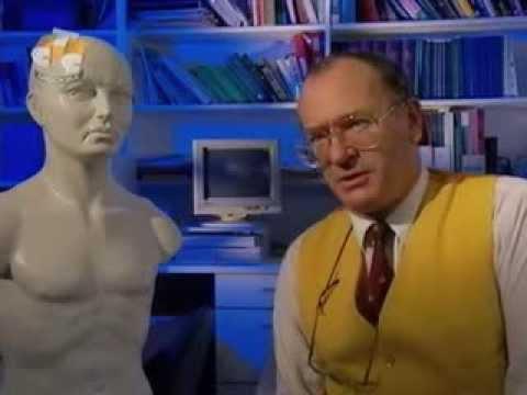 Химия тела. Гормональный рай. BBC. 2 серия.
