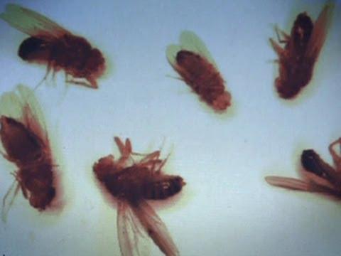 Большой скачок. Великие мухи науки. Часть 1