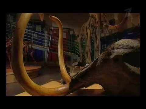 Искатели - Охота на живого мамонта