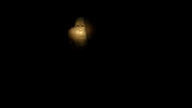 Видео с белым йети (Снежный человеком)